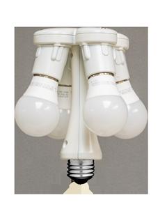 moreLamplight and Bulbs